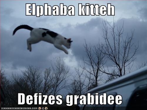Elphaba kitteh  Defizes grabidee