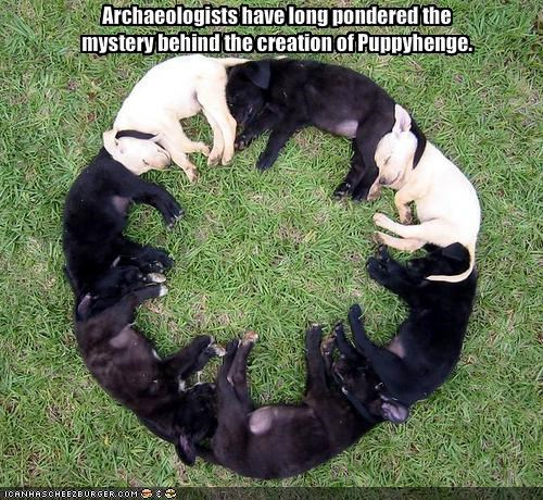 Archaeologists have long pondered the mystery behind the creation of Puppyhenge.