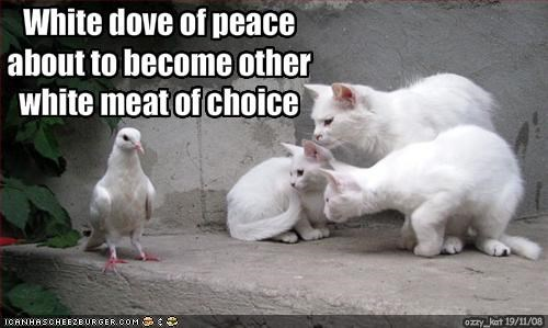 White dove of peace about to become other white meat of choice