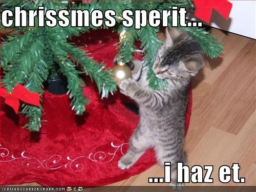 christmas,cute,kitten,lolcats,lolkittehs,Spirit,tree