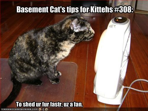 Basement Cat's tips for Kittehs #308: