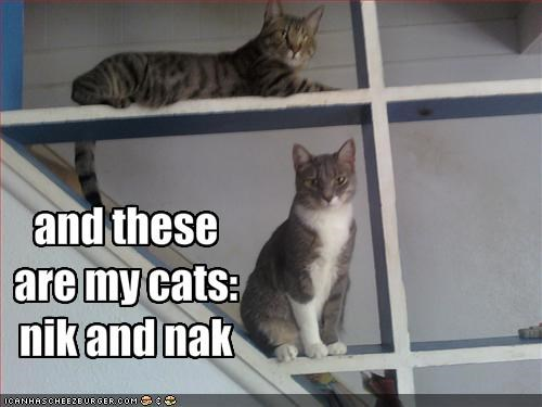and these are my cats: