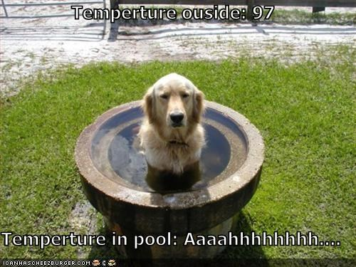 Temperture ouside: 97  Temperture in pool: Aaaahhhhhhhh....