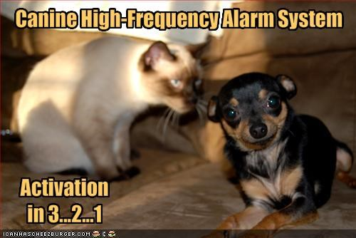 Canine High-Frequency Alarm System