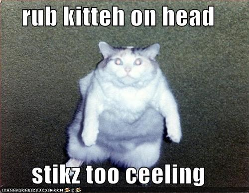 rub kitteh on head  stikz too ceeling