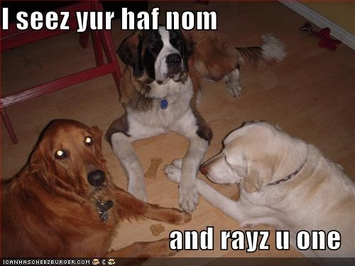 I seez yur haf nom  and rayz u one