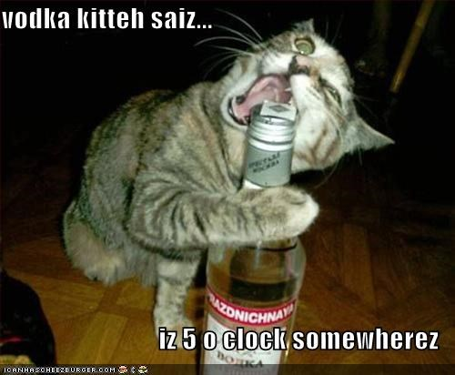 vodka kitteh saiz...  iz 5 o clock somewherez