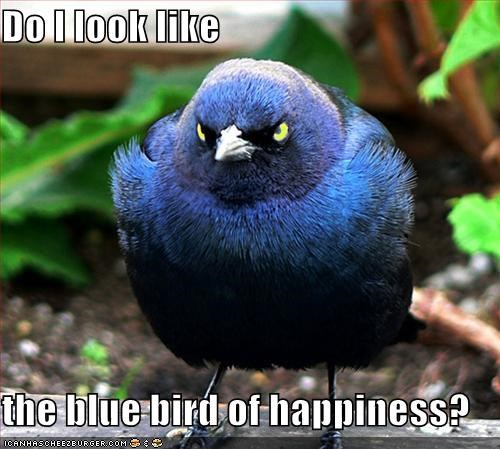 Do I look like  the blue bird of happiness?