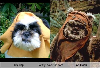 My Dog Totally Looks Like An Ewok