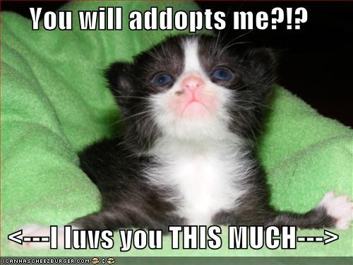 You will addopts me?!?    <---I luvs you THIS MUCH--->