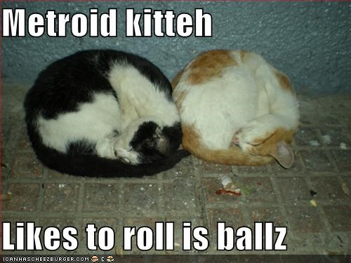 Metroid kitteh  Likes to roll is ballz