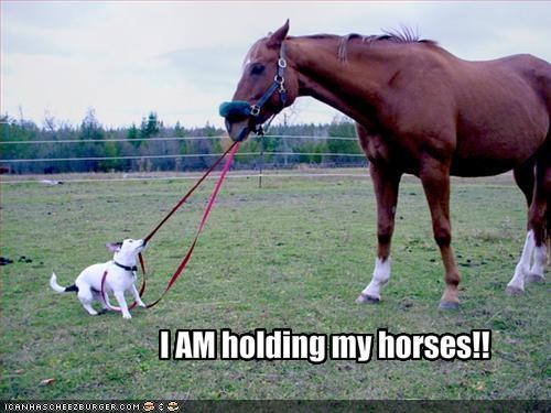 I AM holding my horses!!