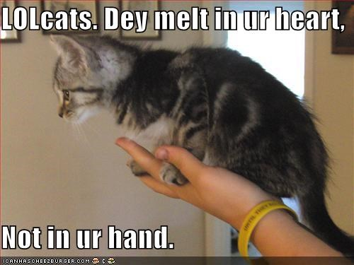 LOLcats. Dey melt in ur heart,  Not in ur hand.