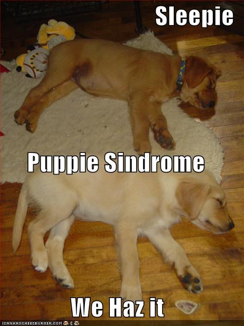 Sleepie Puppie Sindrome We Haz it