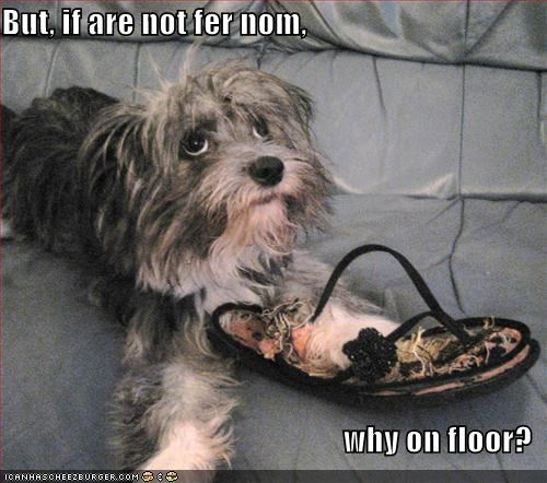 But, if are not fer nom,   why on floor?