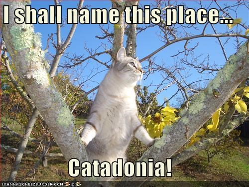 I shall name this place...  Catadonia!