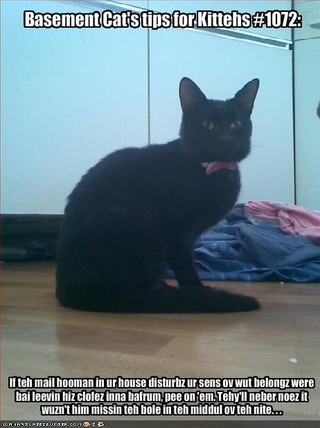 Basement Cat's tips for Kittehs #1072: