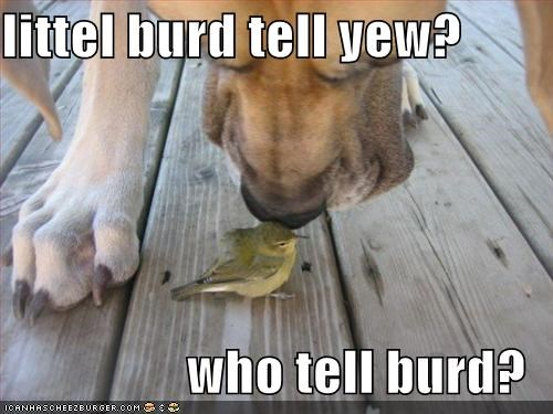 littel burd tell yew?  who tell burd?