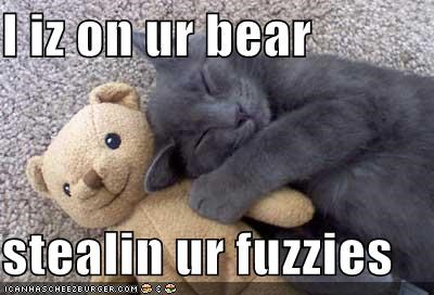 I iz on ur bear  stealin ur fuzzies