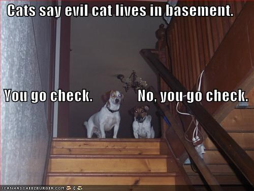 Cats say evil cat lives in basement.  You go check.               No, you go check.