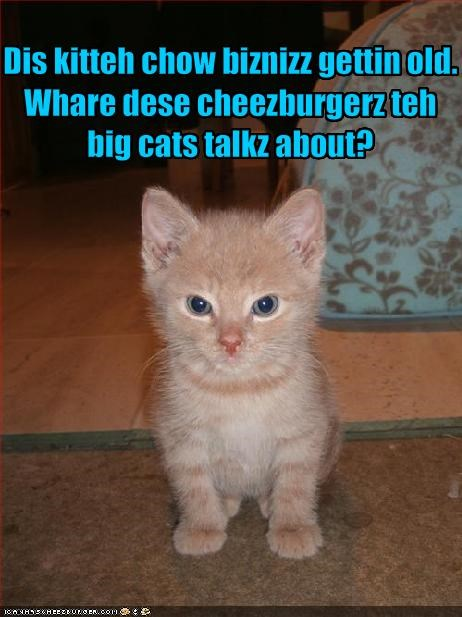 Dis kitteh chow biznizz gettin old.  Whare dese cheezburgerz teh big cats talkz about?
