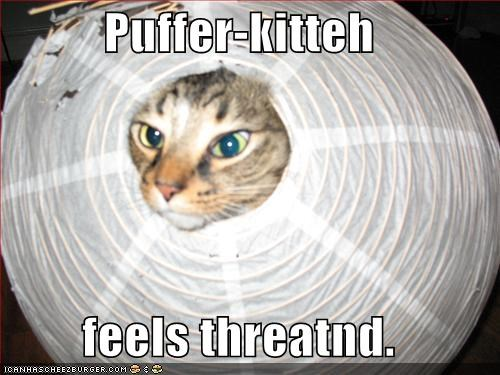 Puffer-kitteh  feels threatnd.