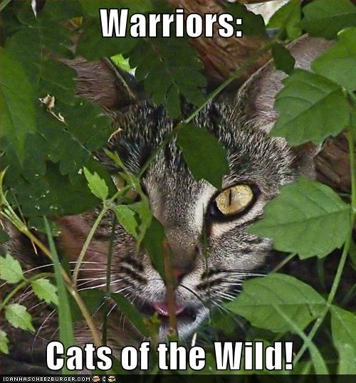 Warriors:  Cats of the Wild!