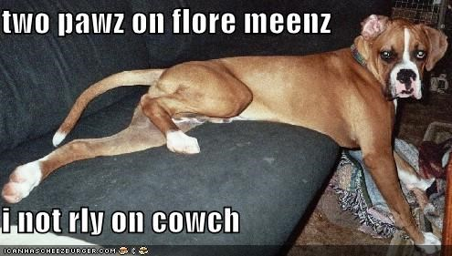 two pawz on flore meenz  i not rly on cowch