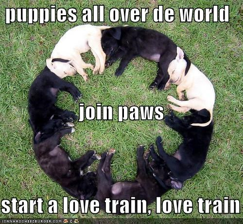 puppies all over de world   join paws start a love train, love train