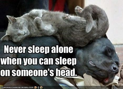 Never sleep alone when you can sleep on someone's head.