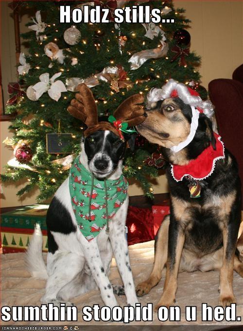 antlers,border collie,christmas,costume,german shepherd,stupid,tree