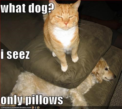 what dog? i seez only pillows