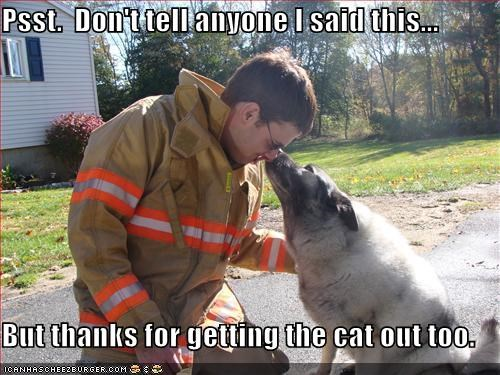 Psst.  Don't tell anyone I said this...  But thanks for getting the cat out too.