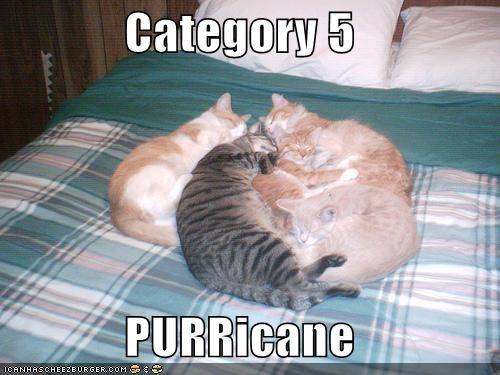 Category 5  PURRicane