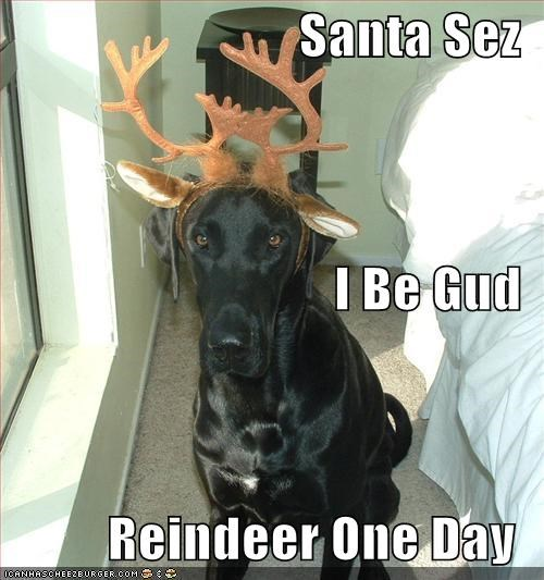 Santa Sez  I Be Gud Reindeer One Day