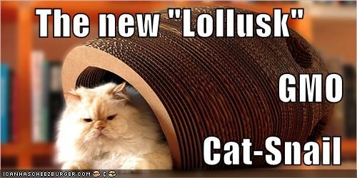 "The new ""Lollusk"" GMO Cat-Snail"