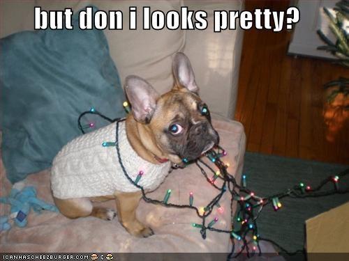 christmas,french bulldogs,pretty,sweater
