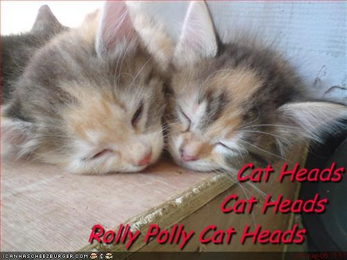 Cat Heads  