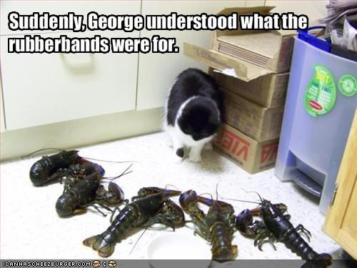 Suddenly, George understood what the rubberbands were for.