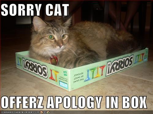 SORRY CAT  OFFERZ APOLOGY IN BOX