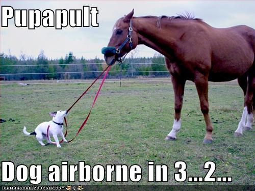 Pupapult  Dog airborne in 3...2...