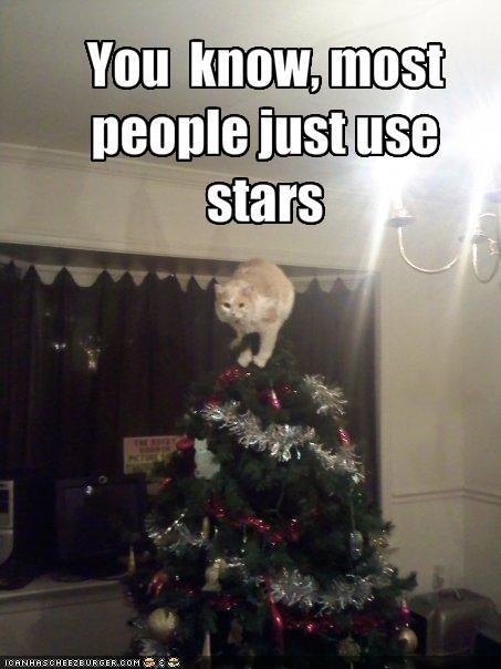 christmas,decorating,lolcats,ornament,stars,tree