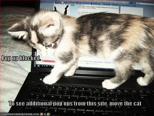 Pop up blocked.  To see additional pop ups from this site, move the cat