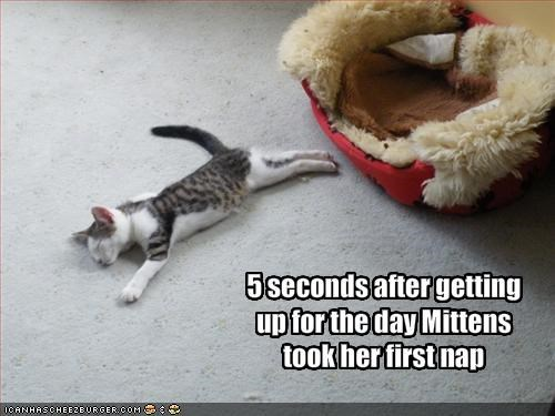 5 seconds after getting up for the day Mittens took her first nap