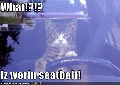 What!?!?  Iz werin seatbelt!