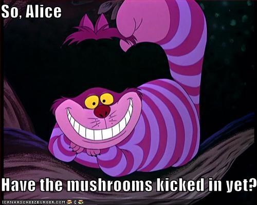 So, Alice  Have the mushrooms kicked in yet?