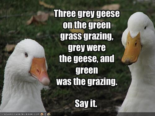 Three grey geese