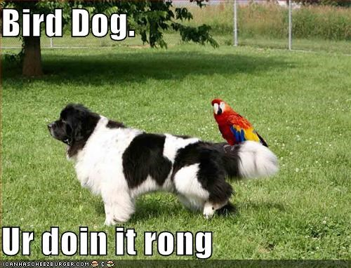 Bird Dog.  Ur doin it rong