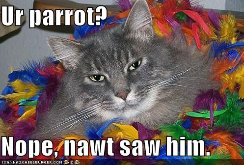Ur parrot?  Nope, nawt saw him.