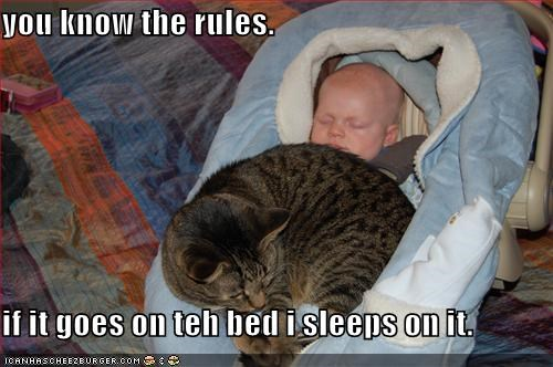 you know the rules.   if it goes on teh bed i sleeps on it.